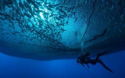 España, número 1 de la acuicultura de la Unión Europea