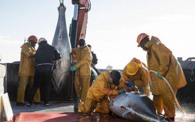 Ricardo-San, el emperador del atún rojo en Japón es murciano y pesca en Cartagena