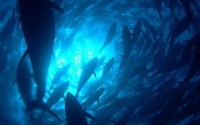 Redes Mar Adentro contribuye al éxito en la Campaña del Atún Rojo