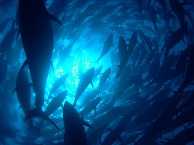 Redes Mar Adentro - Foto de peces